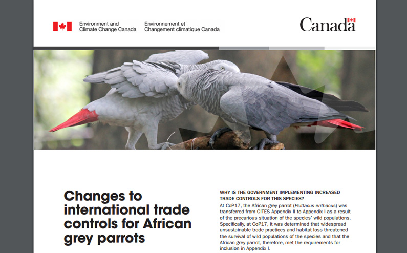 Changes to international trade controls for African Grey Parrots