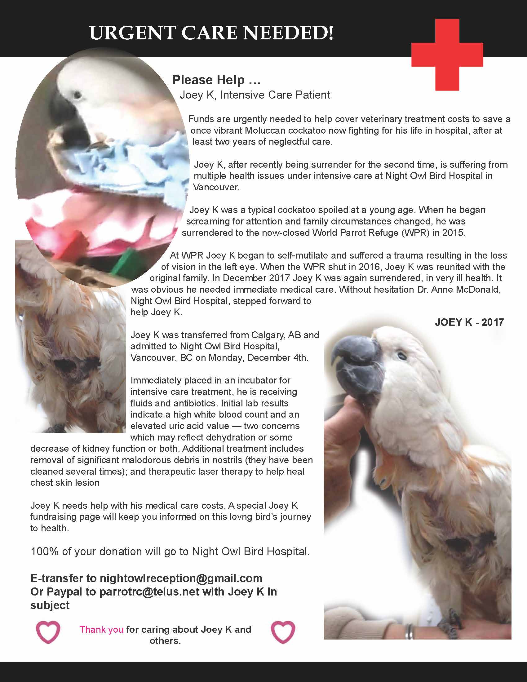 Joey K Urgently Needs Our Help - Parrot Resource Centre